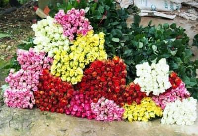 Tìm hiểu về giá hoa hồng Đà Lạt