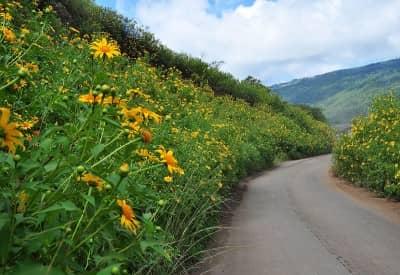 Những địa điểm ngắm hoa Dã Quỳ đẹp nhất Đà Lạt